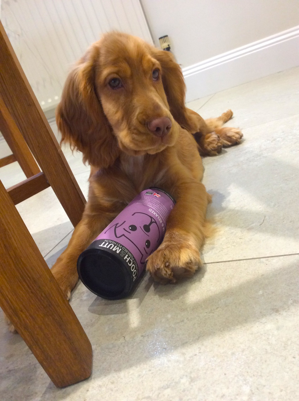 barney the dog sitting with a tube of pooch & mutt treats