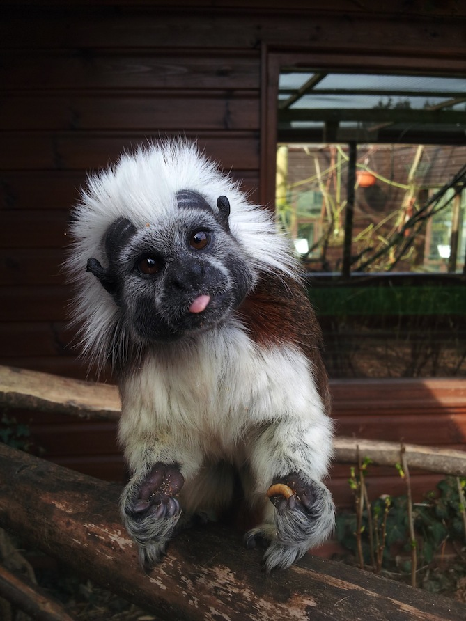 monkey-haven